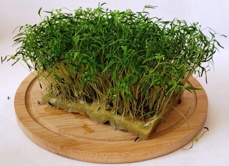 Как самому вырастить микрозелень из семян