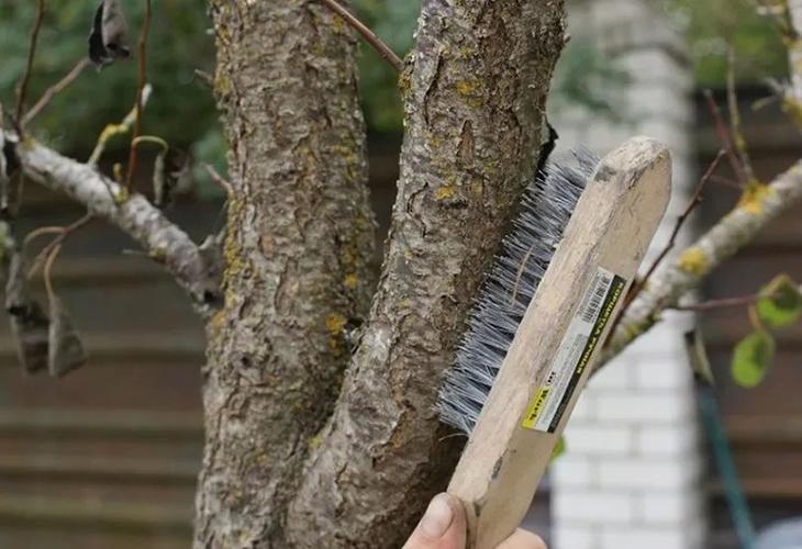 Чистка ствола дерева