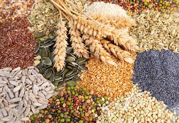 выбор семян по региону