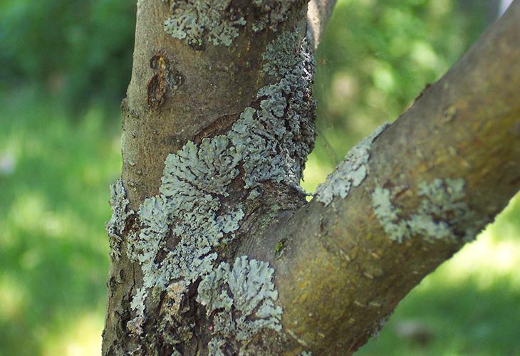 Грибок на дереве
