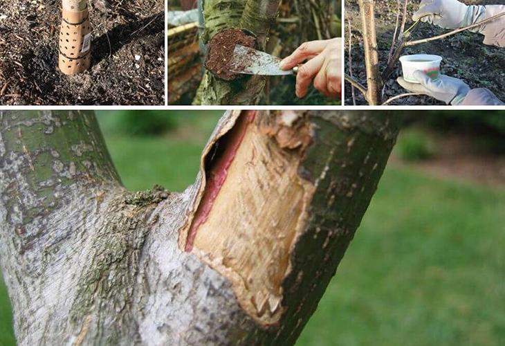 Лечение деревьев от болезней