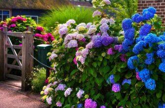 Кустарники возле дома