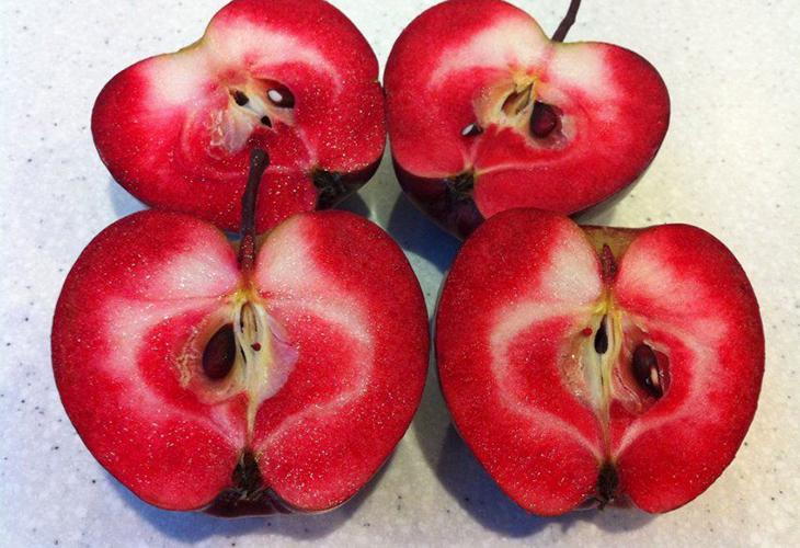 Яблоки Редлав