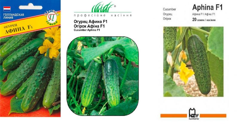 Семена гибрида Афина F1
