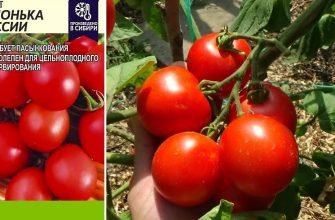 Сорта томатов Яблонька России Полный обзор сорта
