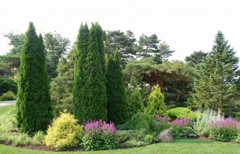 Кипарис вечнозеленый в саду: фото и виды, посадка и уход