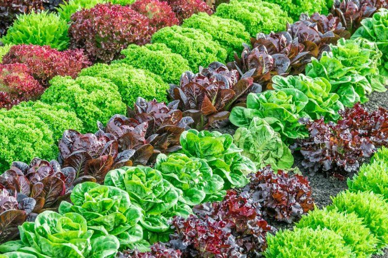 Какие овощи посадить на грядках в огороде