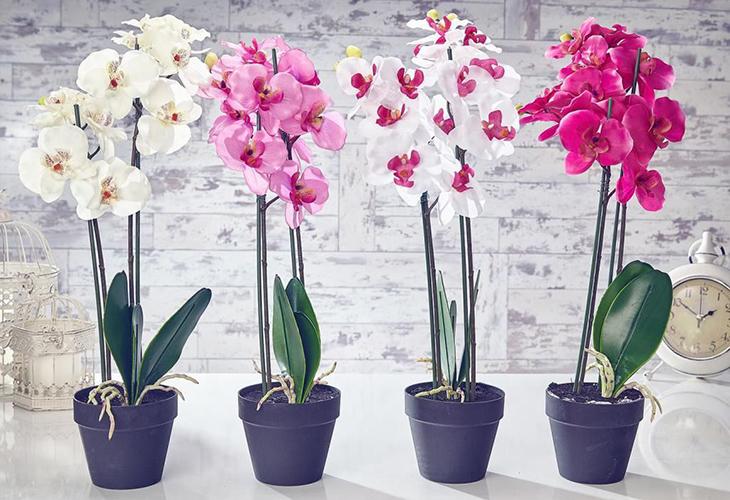 Домашняя орхидея - выращивание