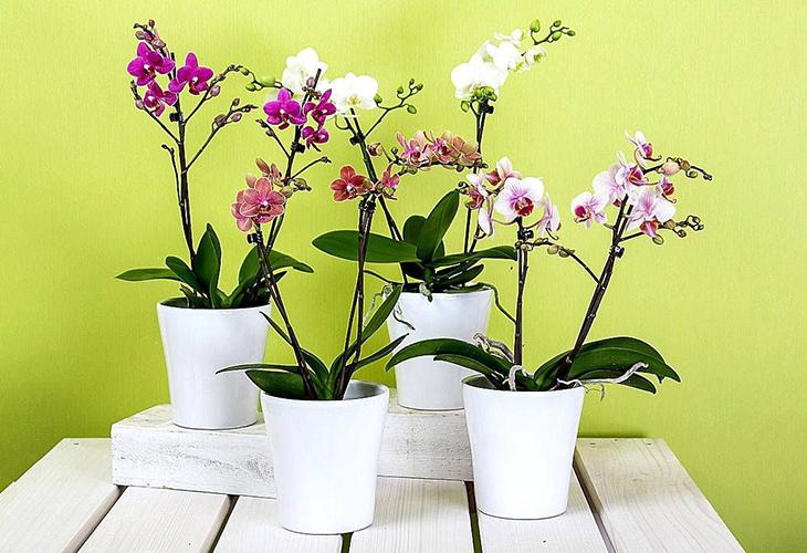 Когда пересаживать орхидею