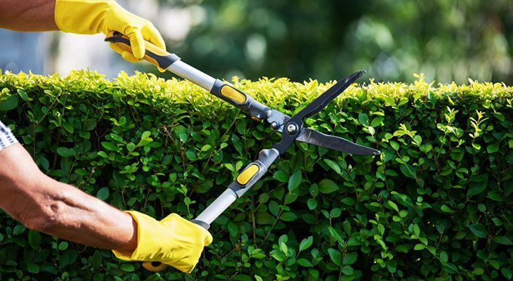Формирование деревьев и кустарников