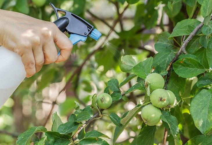 Обработка деревьев до созревания плодов