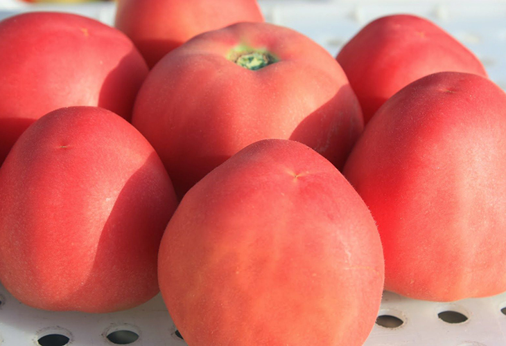 Крупные плоды томата Абрикос