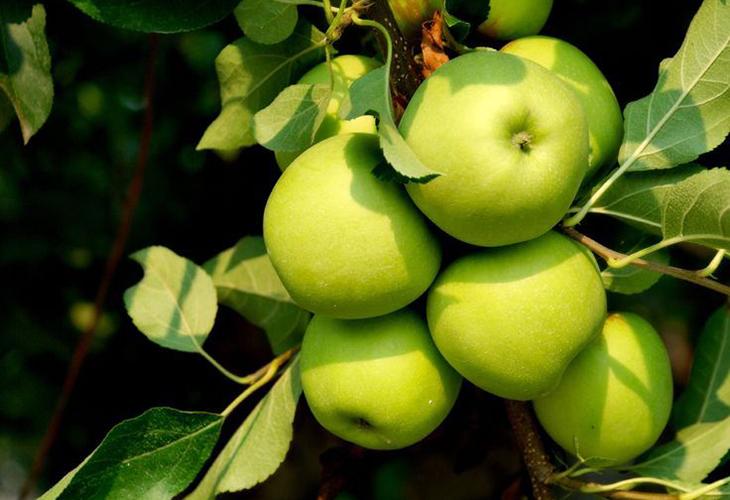 Достоинства яблок Грин Стар