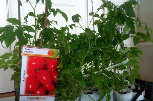 Сроки посадки томата Ракеты на рассаду