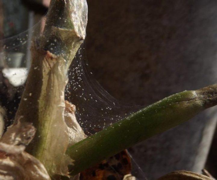 Замиокулькас для Вашего дома – уход за долларовым деревом в домашних условиях