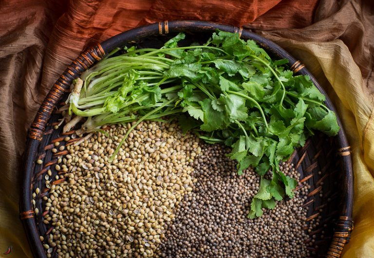 Кинза (кориандр, китайская петрушка) – полезные свойства и противопоказания