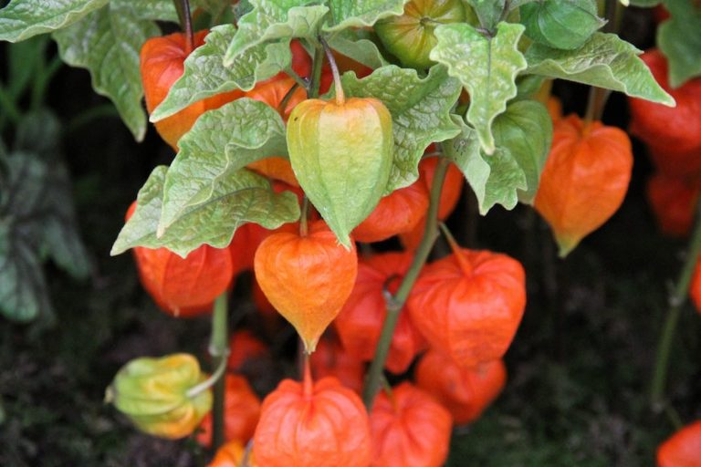 Неприхотливые многолетние цветы из семян для сада