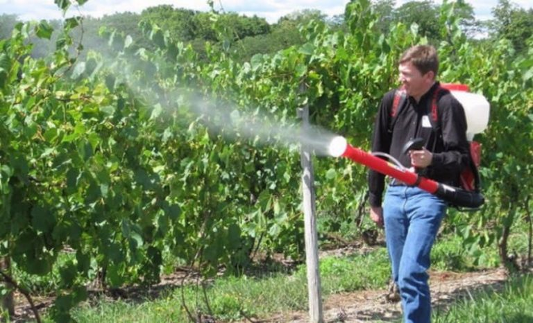 Фалькон фунгицид – инструкция по применению препарата для винограда