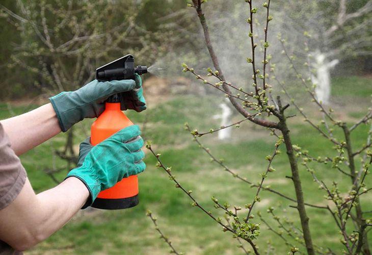 Весеннее опрыскивание вишни