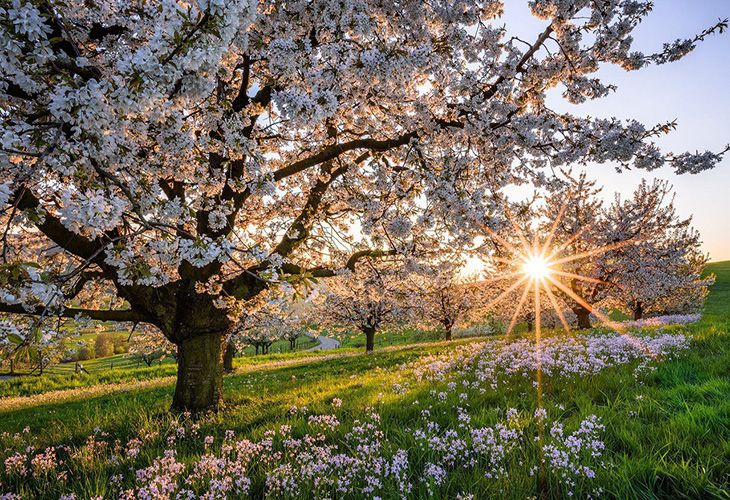 Сад ранней весной