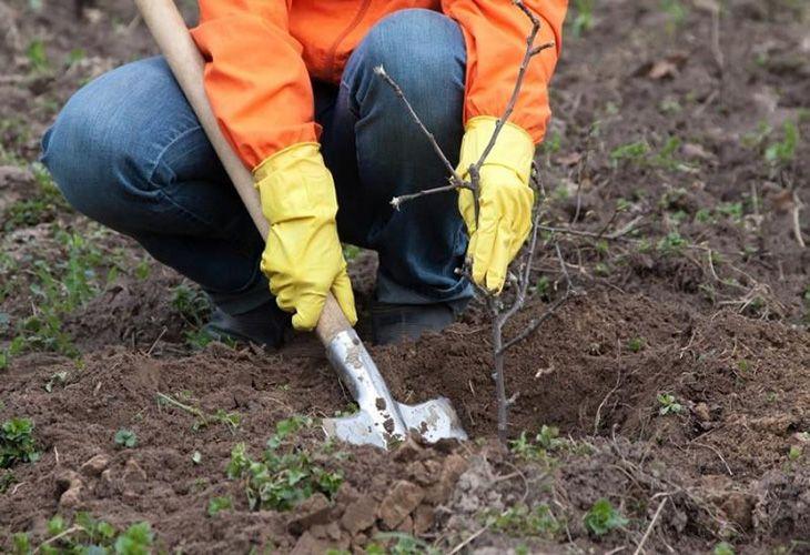 Садить деревья весной