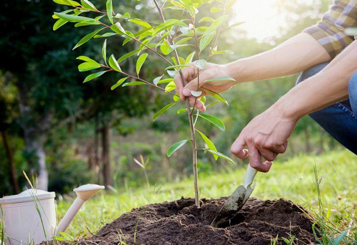 Посадка деревьев поздней весной