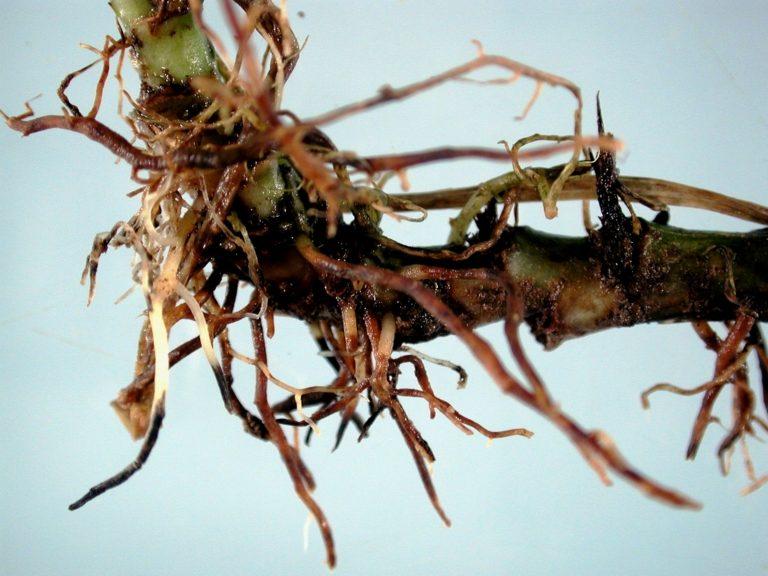 Молочай (эуфорбия) – выращивание и уход в комнатных условиях