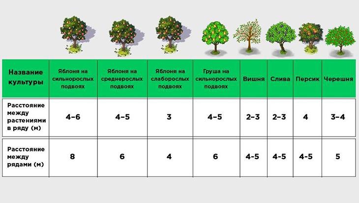 Схема расстояния для посадки деревьев