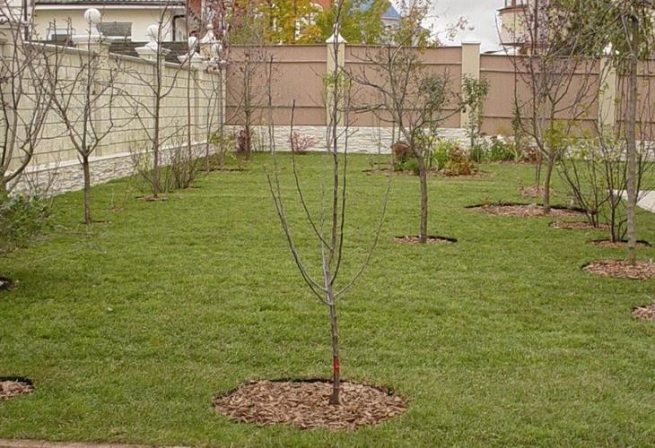Соседство разных видов деревьев