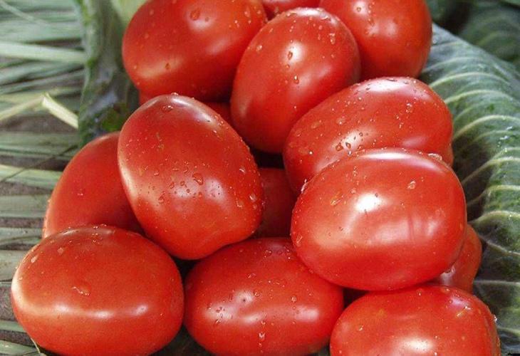 Урожайность томата Рио Гранде