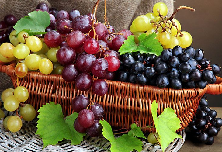 Разнообразие сортов винограда