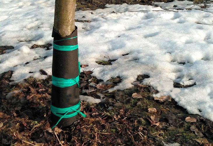 Защита саженцев на зиму