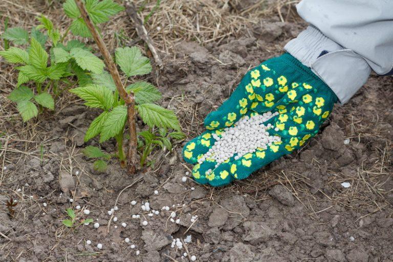 Подкормка малины в весенний период – лучшие рецепты для хорошего урожая